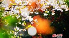 【醉美邵阳】绥宁县城春景美如画