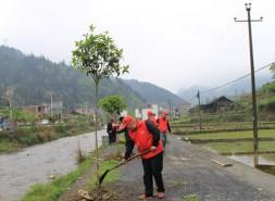 市郵政管理局赴城步扶貧點開展義務植樹活動