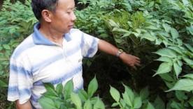 金石桥镇发展地方特色助农增收