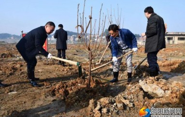 新邵县积极开展义务植树活动