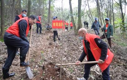 邵阳市司法局开展植树造林活动